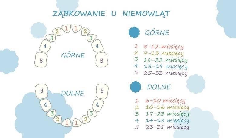 Diagram z kolejnością wyrzynania się zębów.